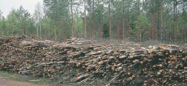 Small trees harvested during thinning will be converted to biomass fuel