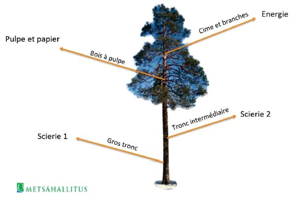 Un arbre fournit une énergie renouvelable et beaucoup plus