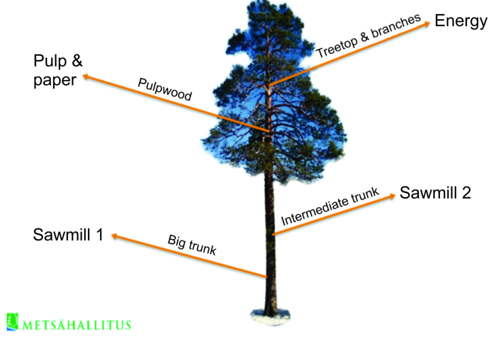 A tree can provide raw materials for several different industries