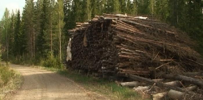 Séchage passif de résidus forestiers